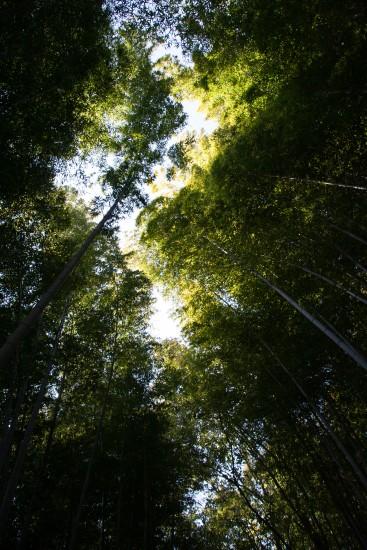 La forêt de bambou d'Arashiyama - Kyoto
